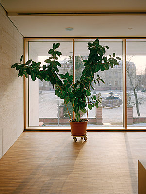 Plant - p1177m965830 by Philip Frowein