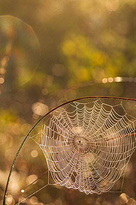 View of spider web - p312m2145943 by Mikael Svensson