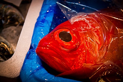 A fish for sale in Tsukiji Market, Tokyo, Japan. - p934m1177224 by Dominic Blewett
