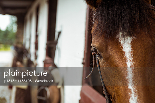 Horse in stable of equestrian centre in the countryside