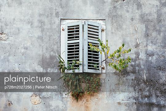 Geschlossene Fensterläden mit Blumenwuchs in Vrsa - p728m2027256 von Peter Nitsch