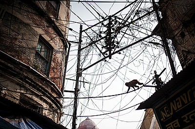 Monkey crossing electric wire mess - p1007m1144348 by Tilby Vattard