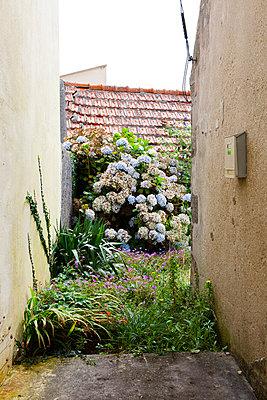 Wild flowers - p6660112 by Sennaa