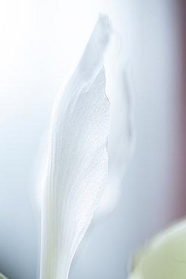 p1371m1225736 von virginie perocheau