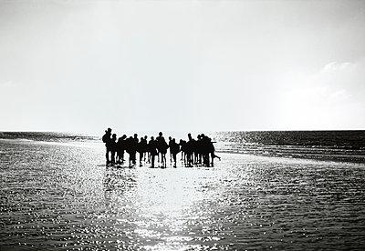 Gruppe bei einer Wattwanderung - p1207m1109468 von Michael Heissner