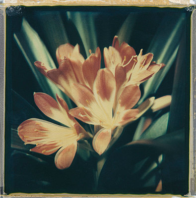 Blume - p9791259 von Rumbach