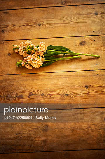 Stock flowers and water droplets spilled on wooden floor  - p1047m2259804 by Sally Mundy