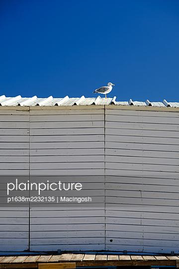 p1638m2232135 by Macingosh