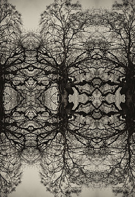 Kaleidoscopic repeated abstract pattern of tree - p1047m2073071 by Sally Mundy