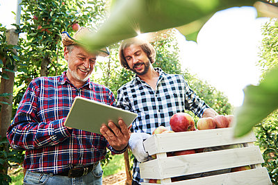 Fruit growers checking quality of apples in their orchard - p300m2166121 by gpointstudio