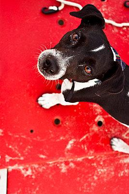 Terrier - p8580030 by Lucja Romanowska