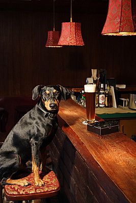 Dog in a bar - p2685293 by Jana Kay