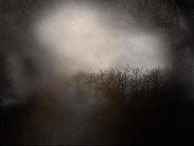 Misty landscape - p945m2181560 by aurelia frey