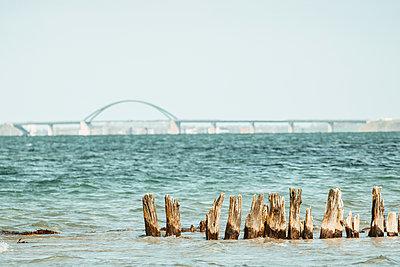 Fehmarnsundbrücke and old groynes in the foreground - p986m2288676 by Friedrich Kayser
