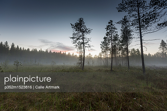 Misty field by forest in Vasterbotten, Sweden - p352m1523816 by Calle Artmark