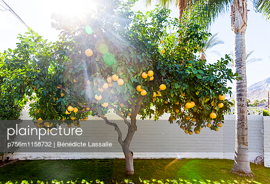 Palm Springs - p756m1158732 von Bénédicte Lassalle