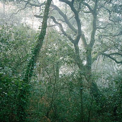 Wald in Talmont Saint Hilaire III - p1097m882148 von Mélanie Bahuon