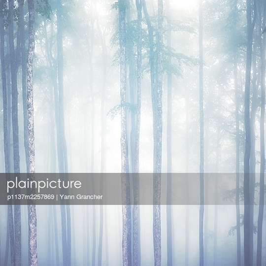 Forest in the fog - p1137m2257869 by Yann Grancher