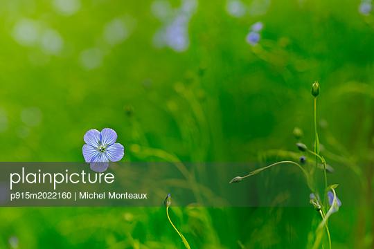 Blaue Blume - p915m2022160 von Michel Monteaux