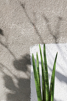 Still life - p3350314 by Andreas Körner