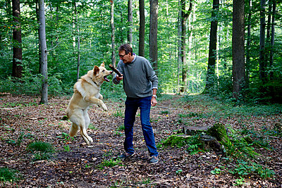 A man is playing fetch with a dog in the forest - p728m729072 by Peter Nitsch