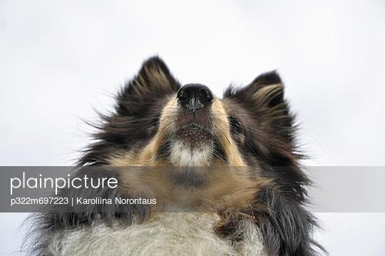Hund - p322m697223 von Karoliina Norontaus