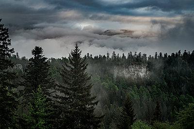 Gewitterwolken über einem Nadelwald, Frankreich - p910m2196467 von Philippe Lesprit
