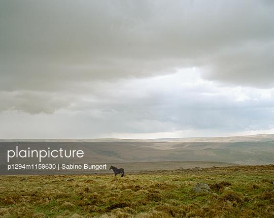 Dartmoor - p1294m1159630 von Sabine Bungert
