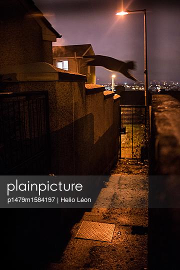p1479m1584197 von Helio Léon