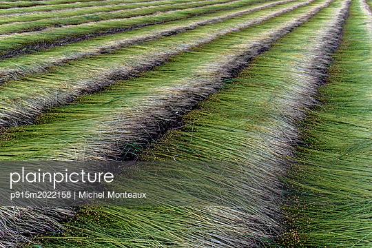 Flachsfeld - p915m2022158 von Michel Monteaux
