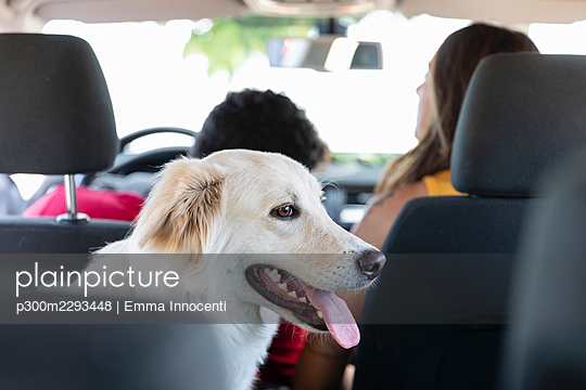Dog sitting with pet owners in car - p300m2293448 by Emma Innocenti