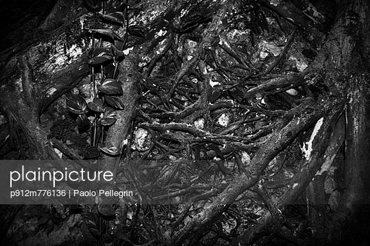 p912m776136 von Paolo Pellegrin