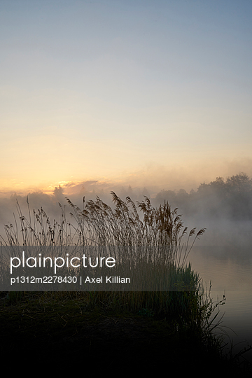 Germany, Reeds on a lake in the fog - p1312m2278430 by Axel Killian