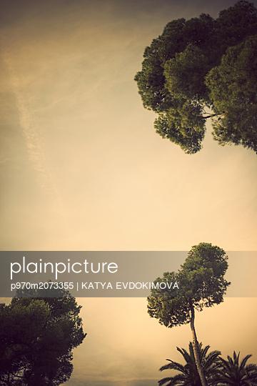 Bäume am Himmel - p970m2073355 von KATYA EVDOKIMOVA