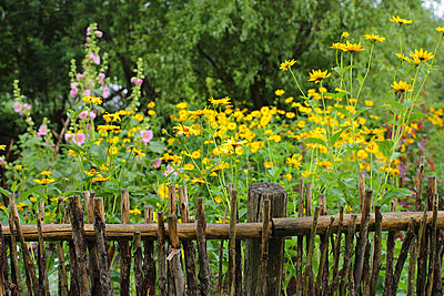 Cottage garden - p1016m924719 by Jochen Knobloch