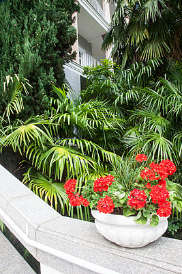 Flowers and Palmtress  - p1514m2109302 by geraldinehaas