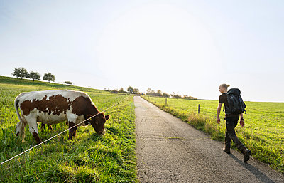 Hiker passing cow, Meerfeld, Rheinland-Pfalz, Germany - p429m1514007 by Mischa Keijser