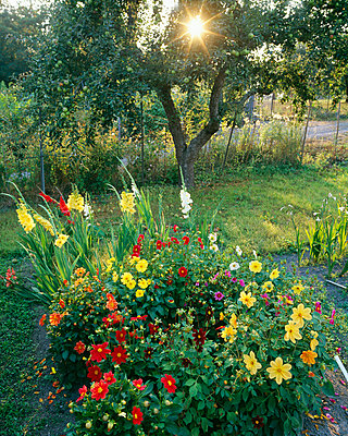 Colourful flowers in garden - p5751434f by Hans Geijer