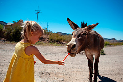 Girl feeding carrot to donkey while standing on dirt road against clear sky during sunny day - p1166m1416263 by Cavan Images