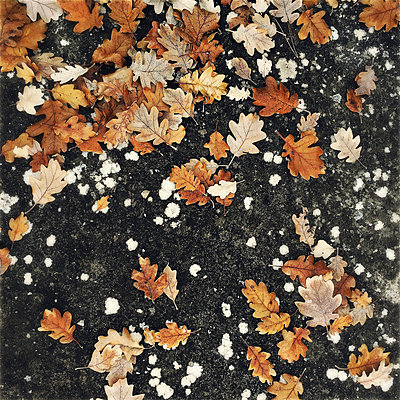 Autumn leaves - p1468m1559358 by Philippe Leroux