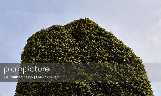 Hausbegrünung - p1164m1590066 von Uwe Schinkel