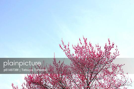 p5149738f von Tetsuya Tanooka