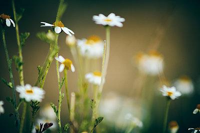 macro photograph of a beauty flower - p1166m2201391 by Cavan Images