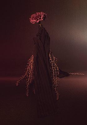 Dianthus caryophyllus - p1457m2160819 von Katrin Saalfrank
