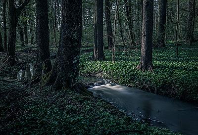 Im Wald - p1512m2037927 von Katrin Frohns