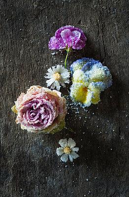 Essblüten - p922m2071556 von Juliette Chretien