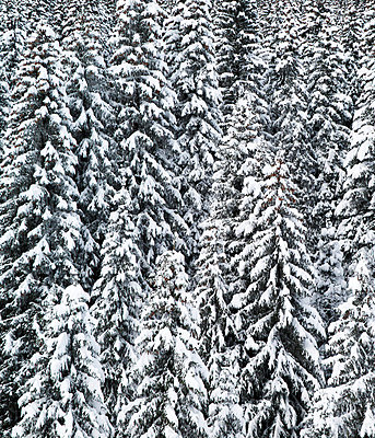 Snow covered trees - p9241565 by Andrea Bakacs