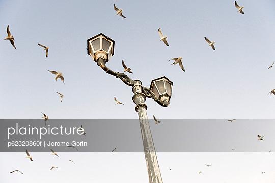 Birds flying over lamp post
