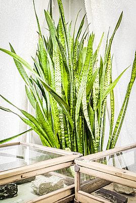 Grünpflanze in einem Museum - p075m2216036 von Lukasz Chrobok