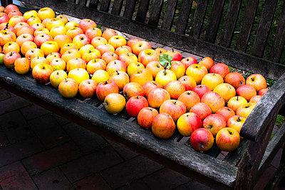 Apfelernte - p1486m2020677 von LUXart